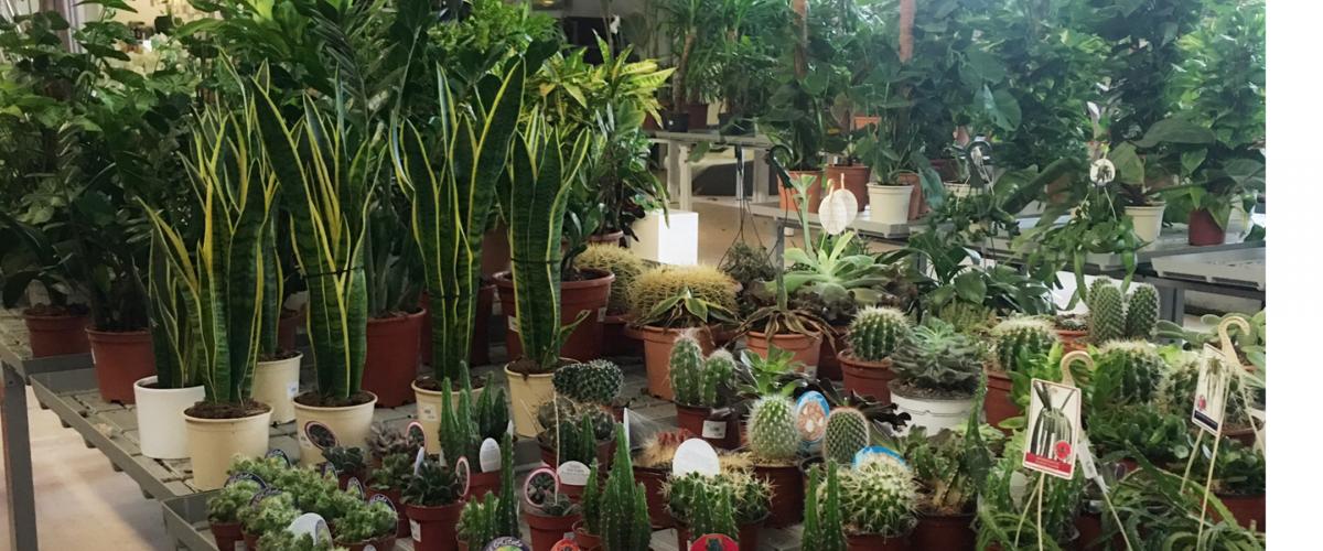 plantas nat